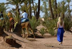 Private camel ride excursion at the palmeraie of Marrakech