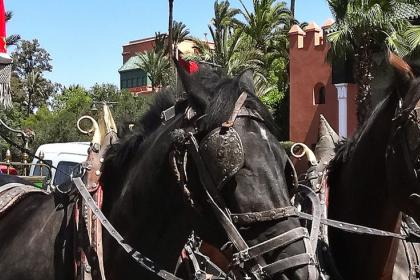 Marrakech gardens by horse carriage