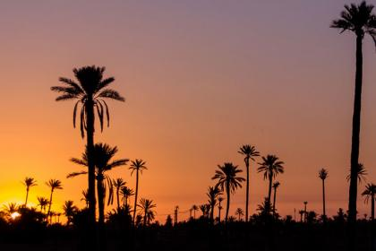 Sunset camel ride at Marrakech palm grove