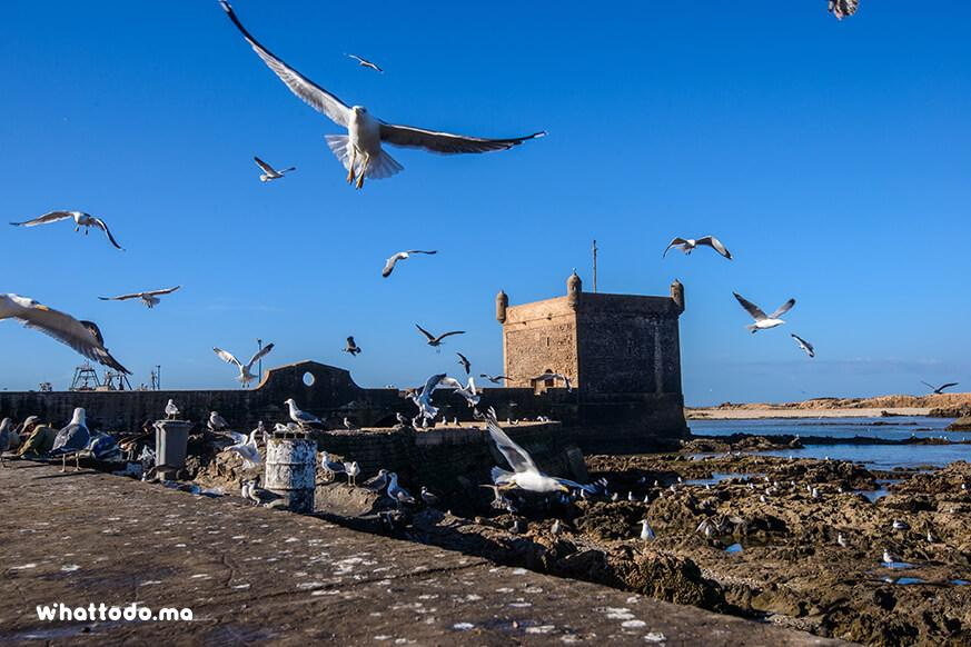 Photo - 8 - Day trip to Essaouira from Marrakech