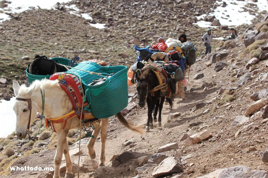 Photo - 4Trekking in Morocco: 2days hikking ascent to mont Toubkal