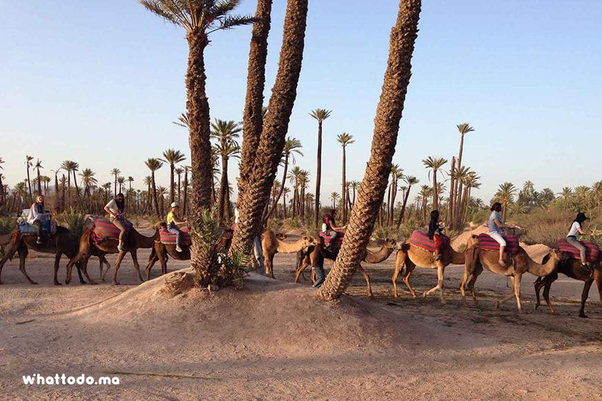 Photo - 6 - Private camel ride excursion at the palmeraie of Marrakech