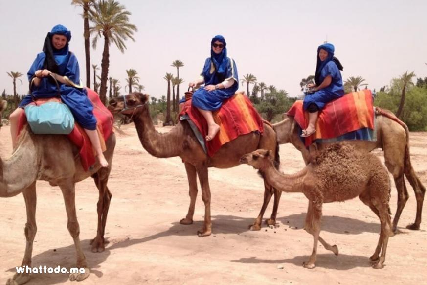 Photo - 2 - Marrakech camel ride