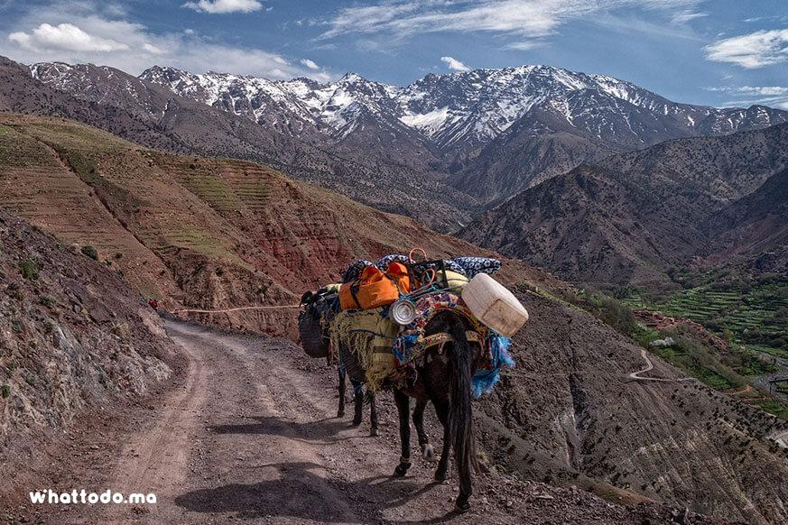 Photo - 5Trekking in Atlas Mountains, through berber villages and valleys