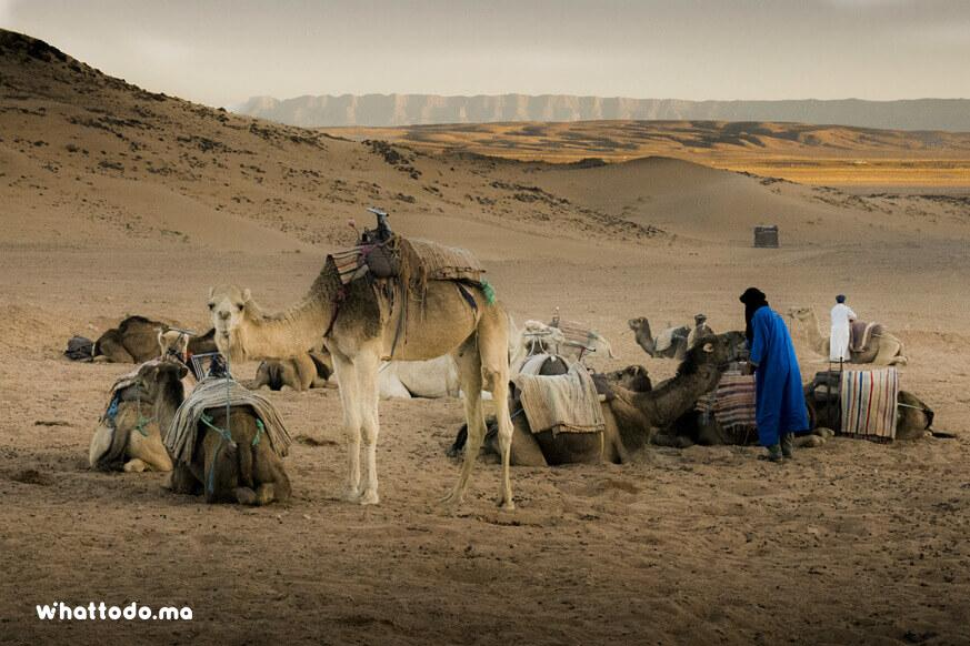 Photo - 9 - Zagora desert tour