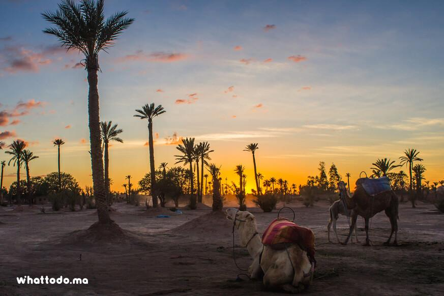 Photo - 7 - Marrakech camel ride